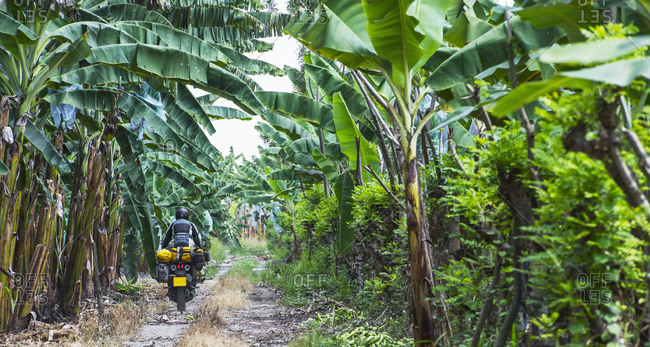 Man riding touring motorbike through banana plantation, Ecuador