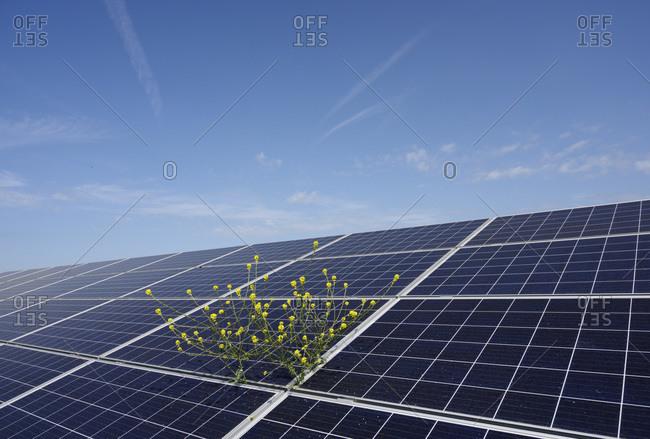Solar panels at solar farm, Geldermalsen, Gelderland, Netherlands