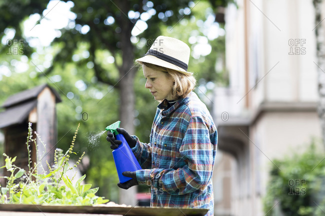 Mid adult woman spraying plants in her garden, side view