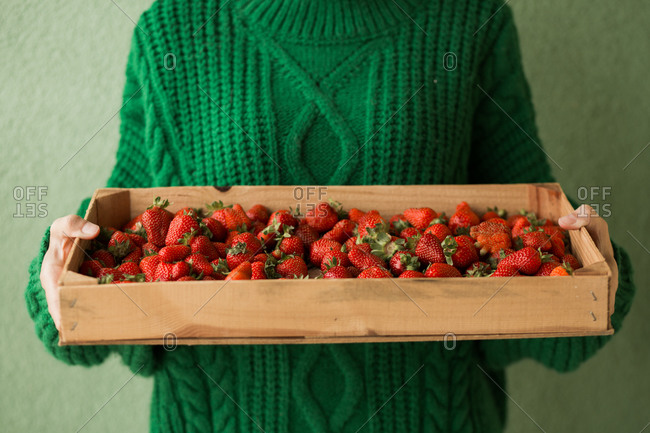 Woman holding basket full of fresh picked strawberries