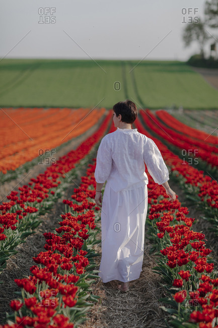 Back view of woman dressed in white walking in tulip field