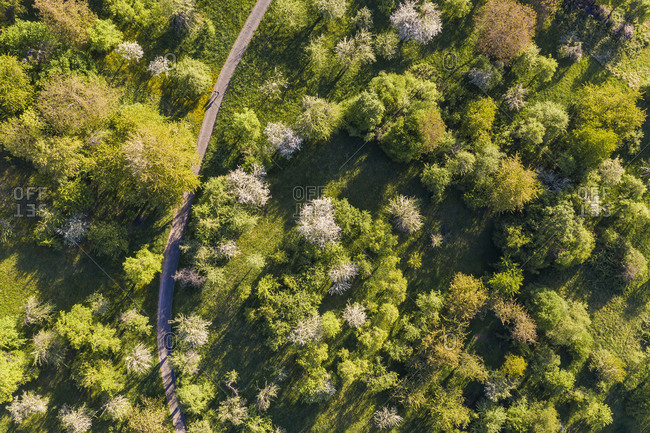 Germany- Baden-Wurttemberg- Esslingen- Aerial view of green orchard in spring