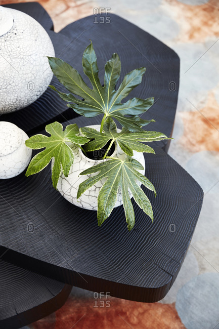 Dark wooden coffee table with house plant in a crackled vase