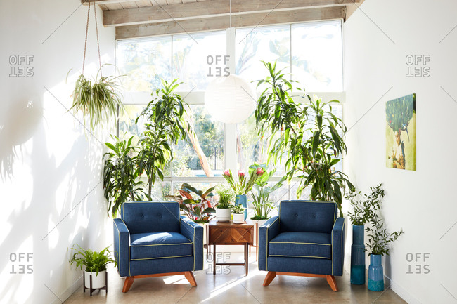 June 1, 2020: Two blue chairs surrounded by plants beside a wall of windows
