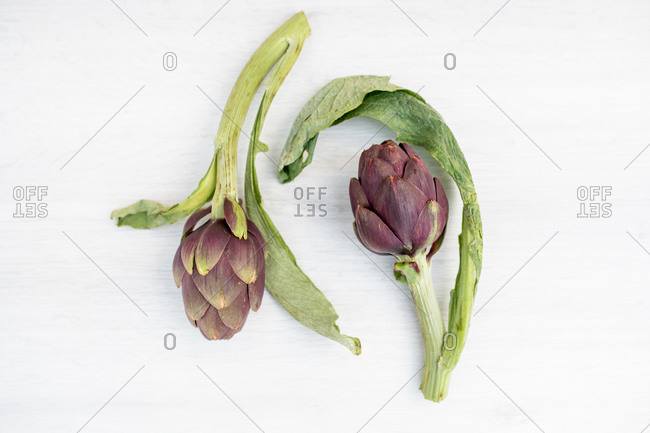High angle close up two freshly picked artichokes on white background.