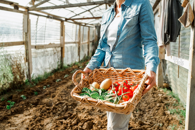 Woman standing in greenhouse on a farm, holding wooden create with freshly picked vegetables.