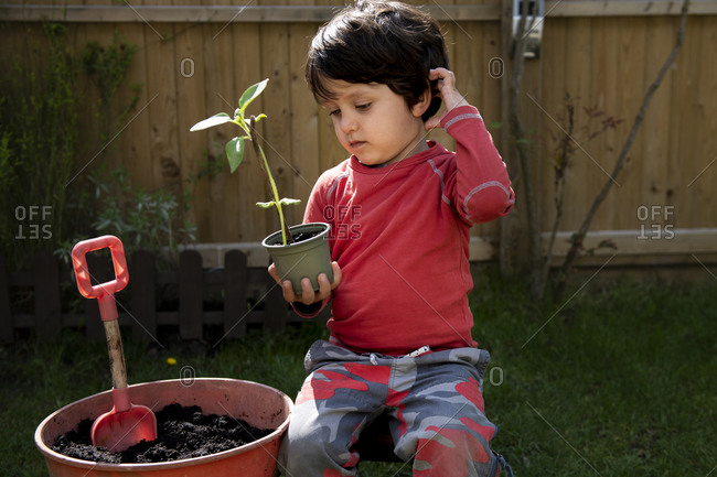 A young boy in a garden planting a sunflower seedling in a plant pot.