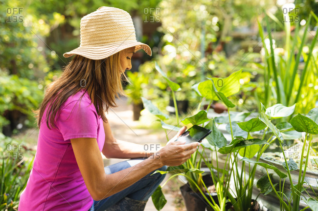 A Caucasian woman wearing a pink t shirt and a straw hat, enjoying time in a sunny garden, touching the leaves of plants and using a tablet computer