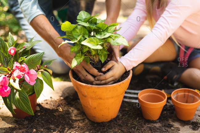 Mid section close up of a Caucasian woman and her daughter enjoying time together in a sunny garden, planting a seedling in a plant pot