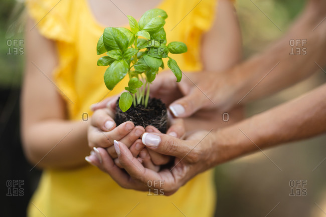 Mid section of the hands of a Caucasian woman and her daughter, standing in a garden, holding a seedling in soil in her cupped hands and presenting it to camera