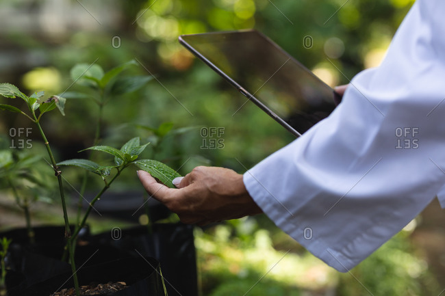 Mid section close up of a Caucasian woman with long brown hair wearing a lab coat, walking in a sunny garden, touching the leaves of plants and using a tablet computer