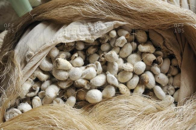 Silk production, sack, bag full of silkworm cocoons, Silk Road, Fergana Valley, Uzbekistan, Central Asia, Asia