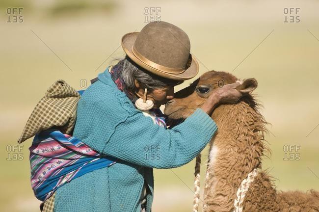 May 21, 2020: Bolivian woman training a young llama (Lama glama), San Juan, Potosi, Bolivia, South America