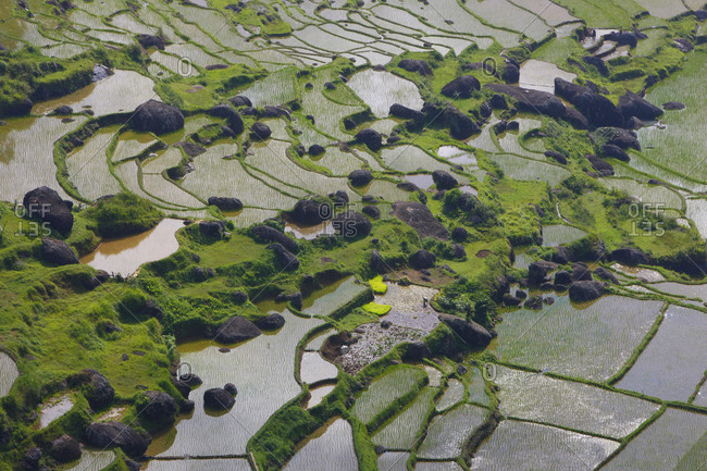 Terraced rice fields, Batutumonga, Toraja land, Sulawesi, Indonesia, Asia