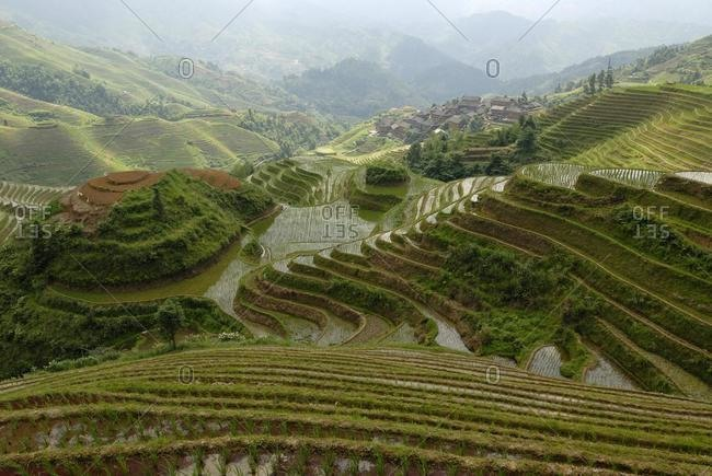 "World-famous rice terraces of Longji ""Backbone of the Dragon"" or ""Vertebra of the Dragon"" for paddy cultivation, Dazhai, Ping'an, Guilin, Longsheng, Guangxi, China, Asia"