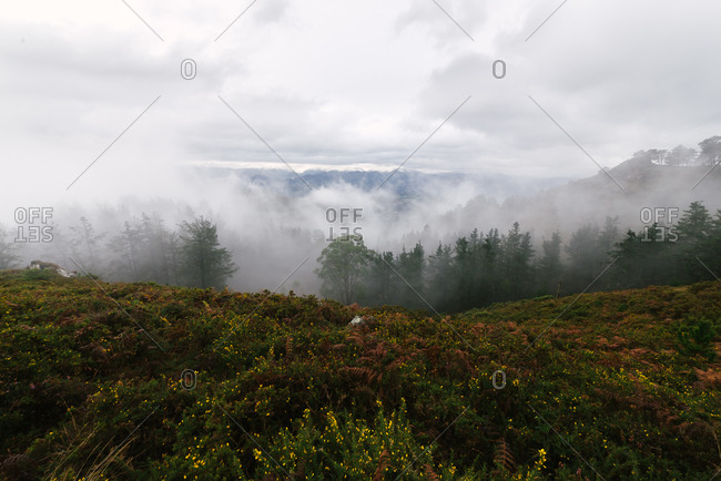 Thick fog floating over calm valley with green forest and blooming hilly field in cloudy summer morning in countryside