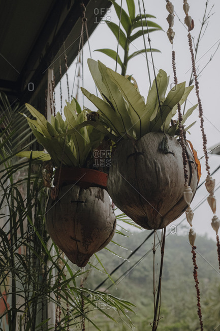 Low angle of green plants in coconut flowerpots placed under roof of wooden house in Bali