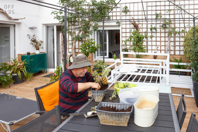 Side view of senior male pensioner in casual clothes and hat planting seedlings in pot while sitting at table in garden near house