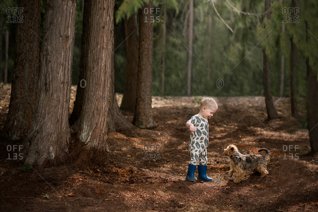 Toddler boy walking in the woods with a yorkie puppy