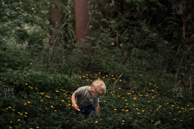 Toddler boy standing among a bunch of yellow flowers in the woods