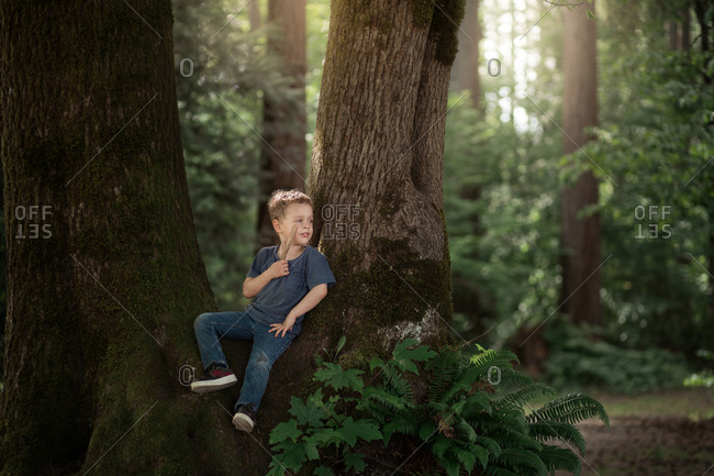 Young blonde boy sitting in a tree holding a stick