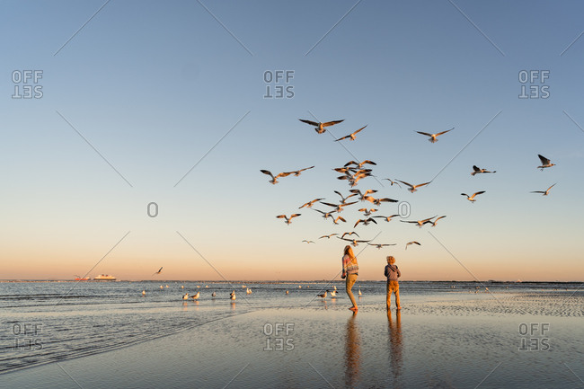 Brother and sister looking up at a flock of seagulls on a beach