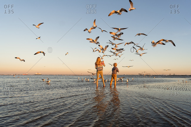 Brother and sister looking up at a flock of seagulls on a beach at sunset