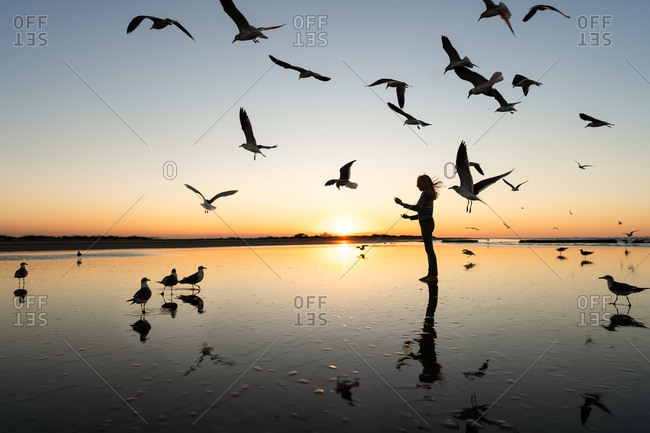 Silhouette of girl surrounded by seagulls on a beach at sunset