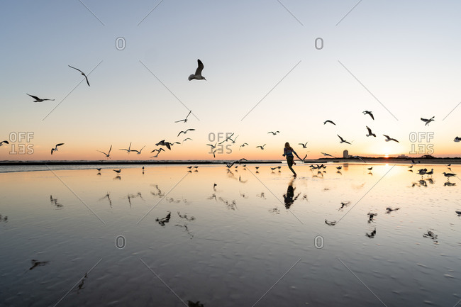 Silhouette of girl running by a flock of seagulls on a beach at sunset
