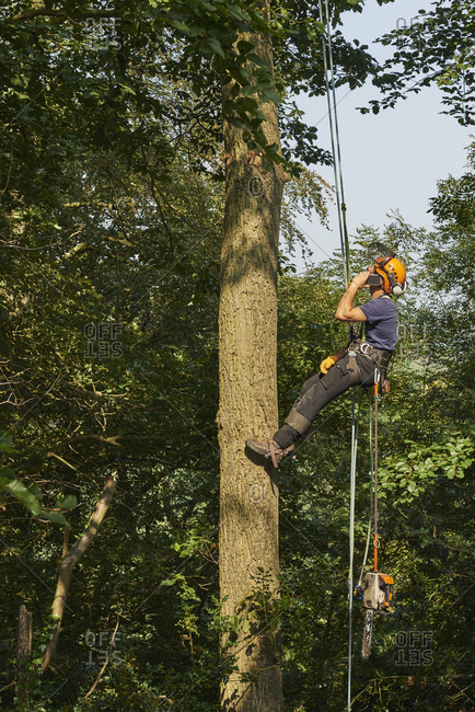 Male tree surgeon wearing rope harness moving up tree trunk, low angle view