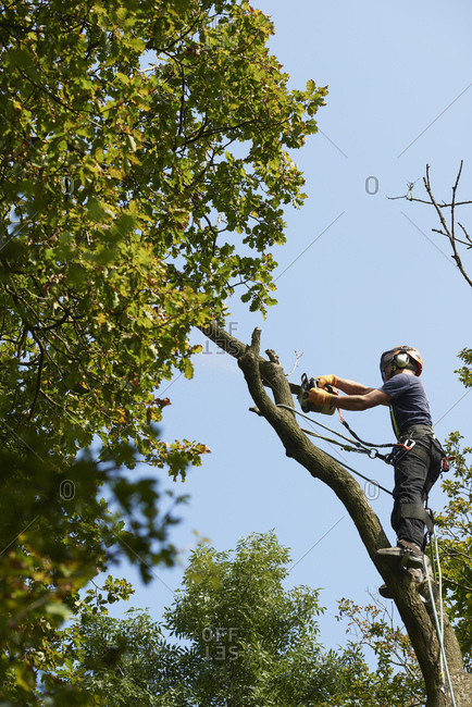 Male tree surgeon in tree top sawing tree branch using chainsaw, low angle view