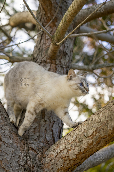 Low angle view of cat on tree branch at orchard