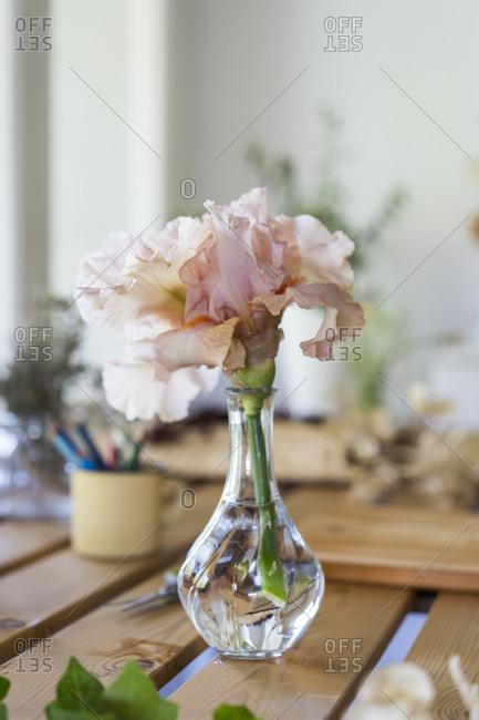 Spain- Pink blooming flowers in glass vase
