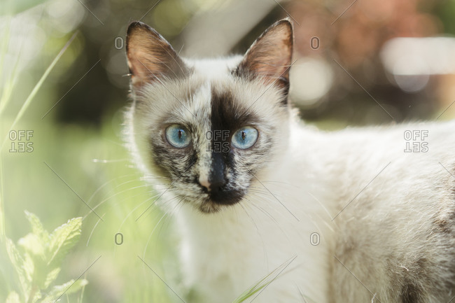 Spain- Portrait of white cat standing outdoors