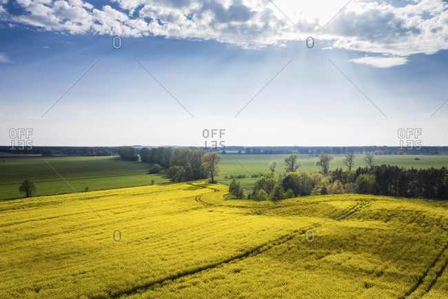 Germany- Brandenburg- Drone view of sky over yellow oilseed rape field