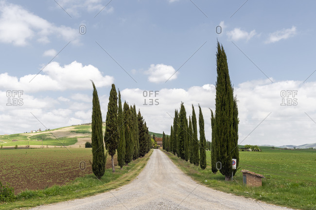 April 14, 2017: Italy- Tuscany- Rows of cypress trees along empty countryside dirt road on sunny day