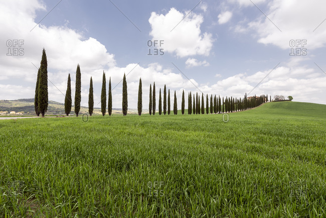 April 14, 2017: Italy- Tuscany- Grassy meadow and treelined rural road on sunny day
