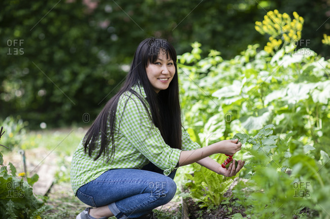 Smiling woman harvesting tomatoes in urban garden