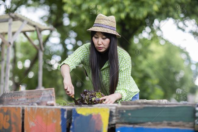 Woman harvesting in urban garden