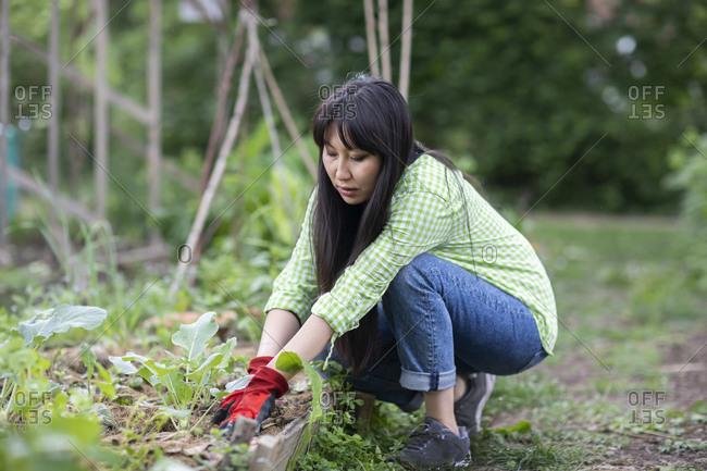 Woman gardening in urban garden