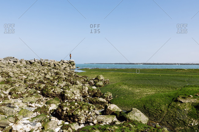 Woman standing on rock at beach against clear blue sky during sunny day