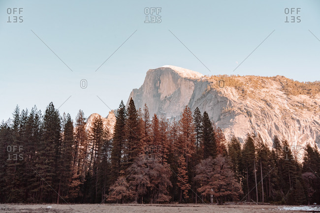 Magnificent landscape of prominent granite cliff surrounded by coniferous trees against cloudless blue sky in sunny day in Yosemite National Park in California