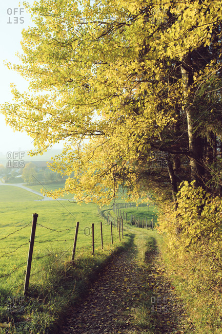 Picturesque autumn trees growing between vast green fenced meadow and empty alley covered with yellow leaves in sunlight in countryside