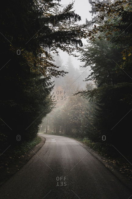 Empty rural road passing by forest on foggy day