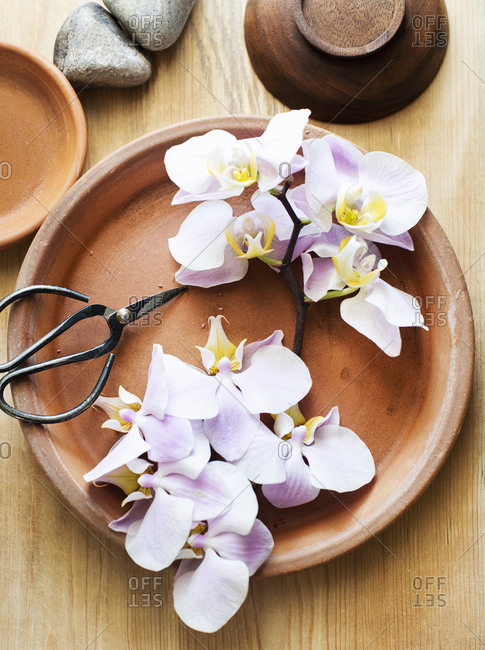 A branch of pink orchids on terracotta plate