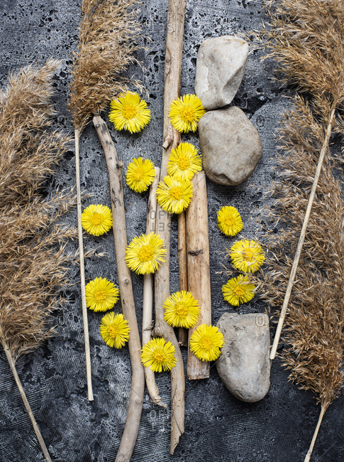 Close up of dandelion heads flowers, harvest grass stalks and stones