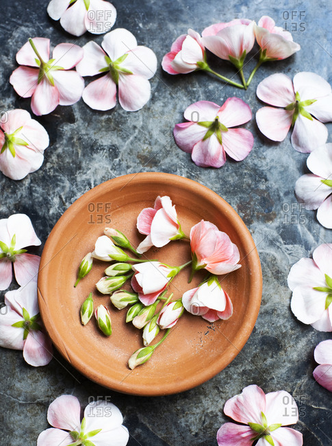 Pink geranium flower on terracotta plate