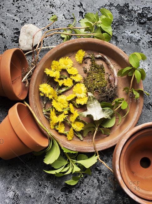 Still life of dandelion flower heads and green plants on terra-cotta plate