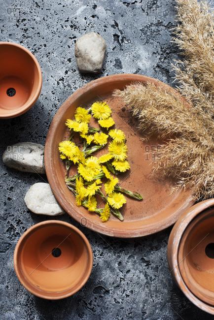 Still life of dandelion flower heads and harvest grass stalks on terra-cotta plate