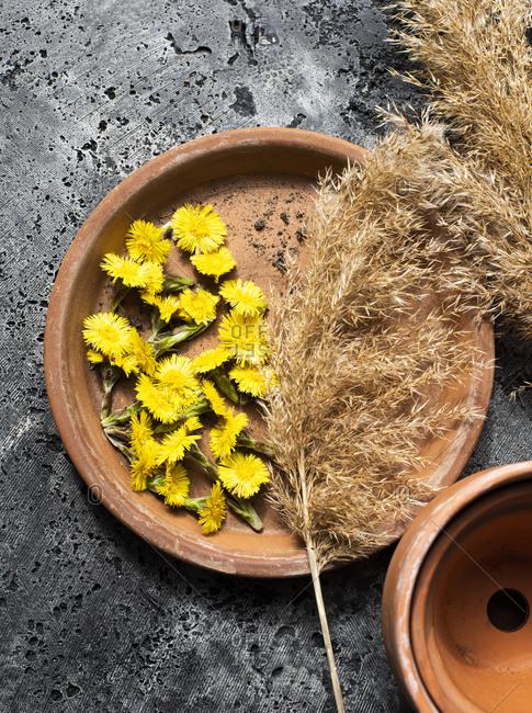 Dandelion flower heads and harvest grass stalks on terra-cotta plate